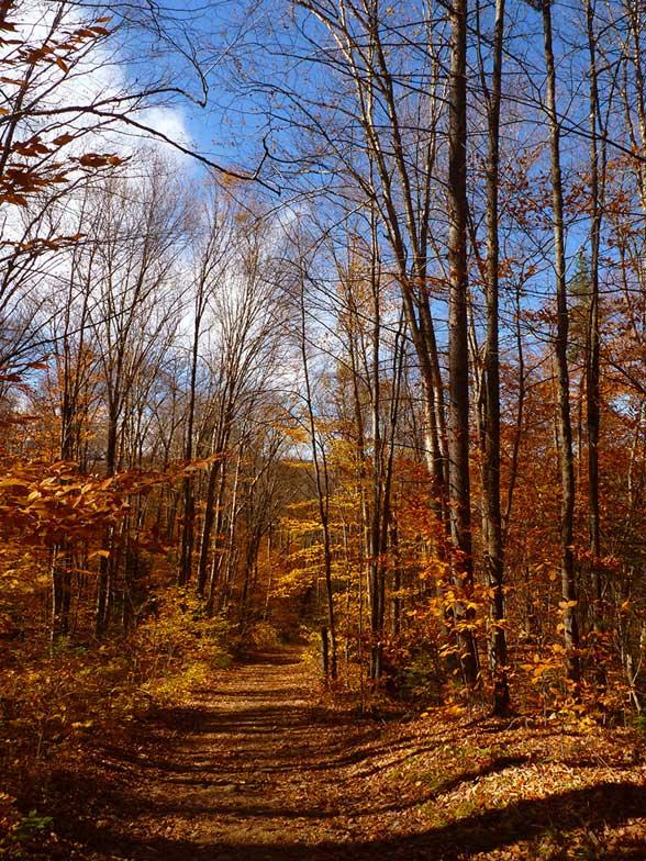 Les jolies couleurs de l 39 automne the daydreameuse blog voyage l - Les couleurs de l automne ...