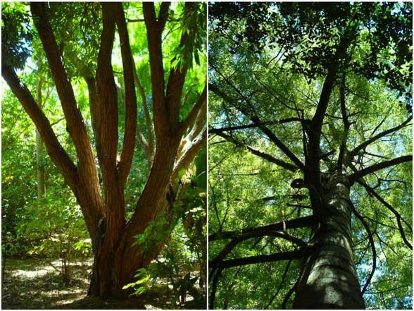 Australie Jardin botanique
