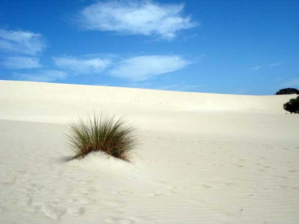Dune Australie Kangaroo Island