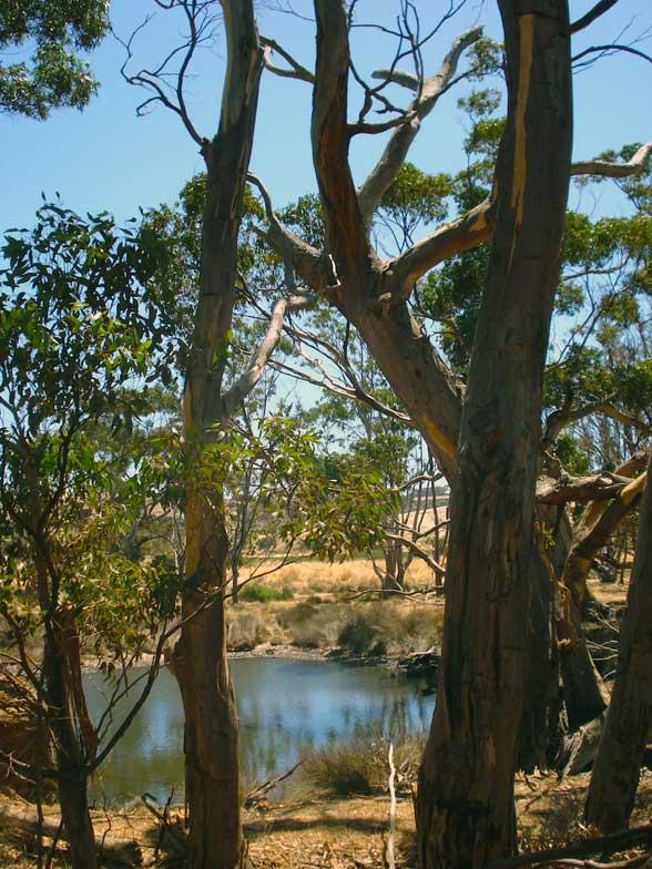 Kangaroo Island Australia