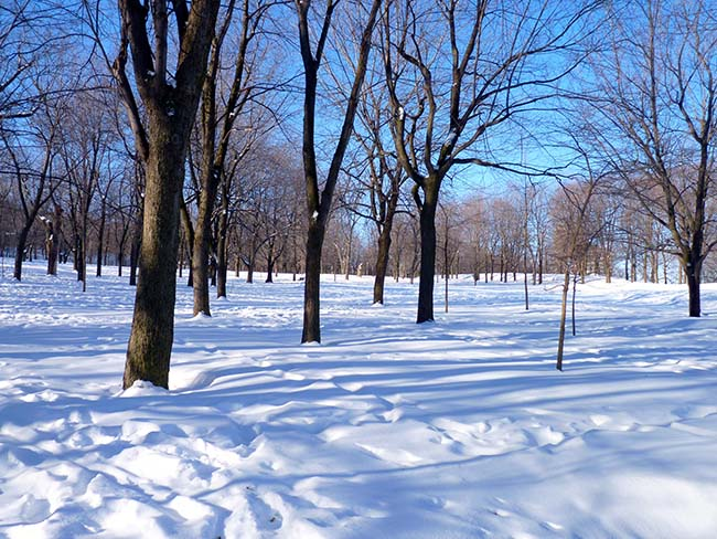 Mont Royal Neige Blanc