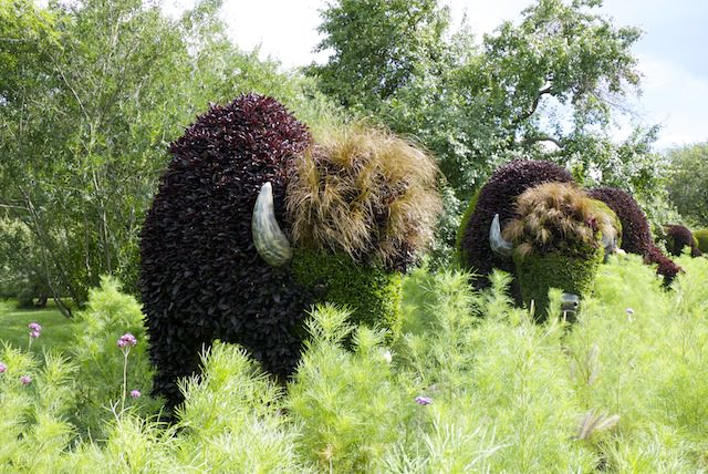 bison sculptures plantes