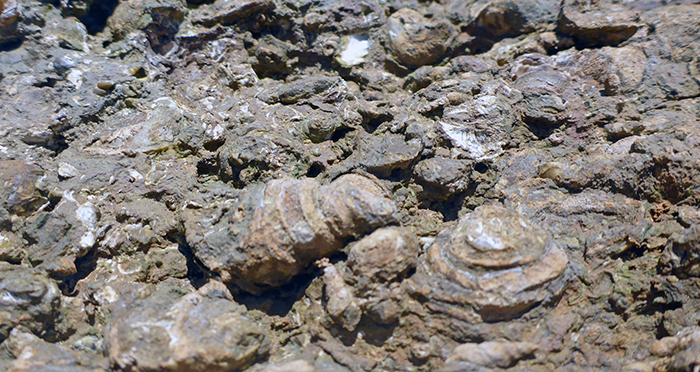 cimetière fossiles krabi