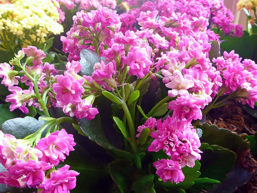 Le ch teau de villandry et ses jardins enchanteurs the for Guide des fleurs du jardin