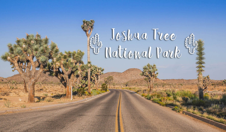 Road trip dans l'Ouest Américain : première étape : Joshua Tree National Park