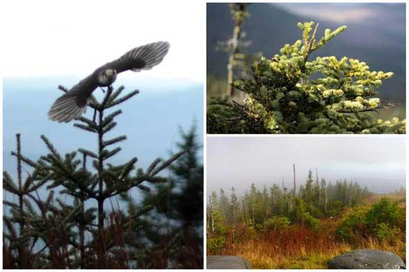 Mont Megantic faune et flore