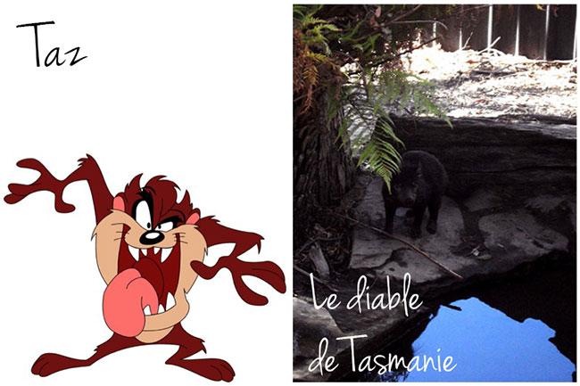 diable-de-tasmanie