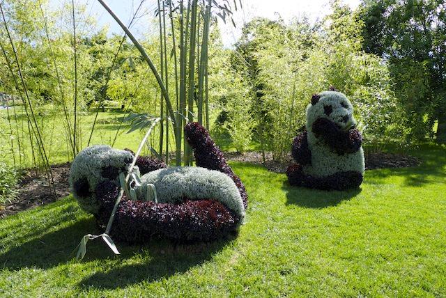 sculptures plantes panda