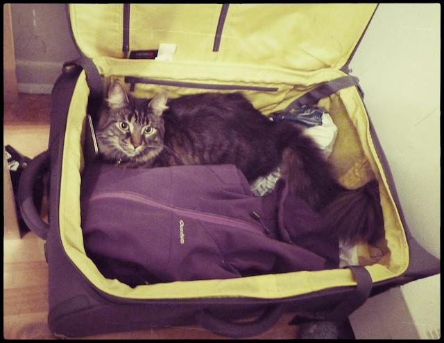 ramener son chat en France