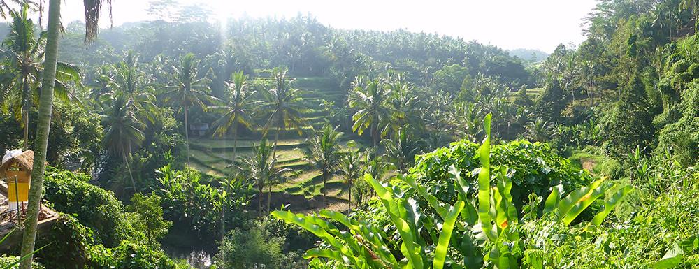 Rizières Ubud, Bali