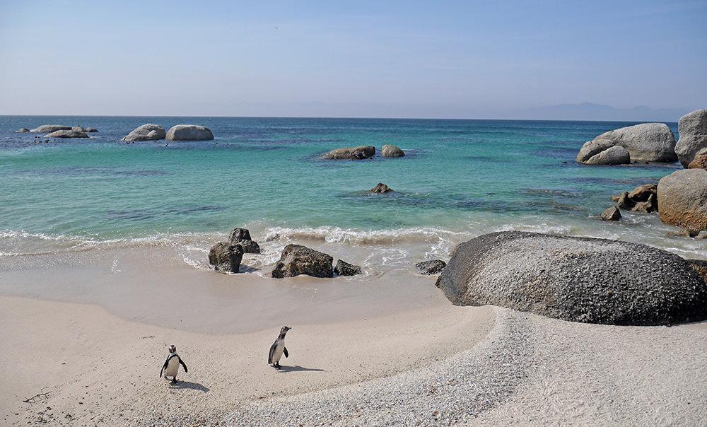 Cape Town Manchot Pingouin 3