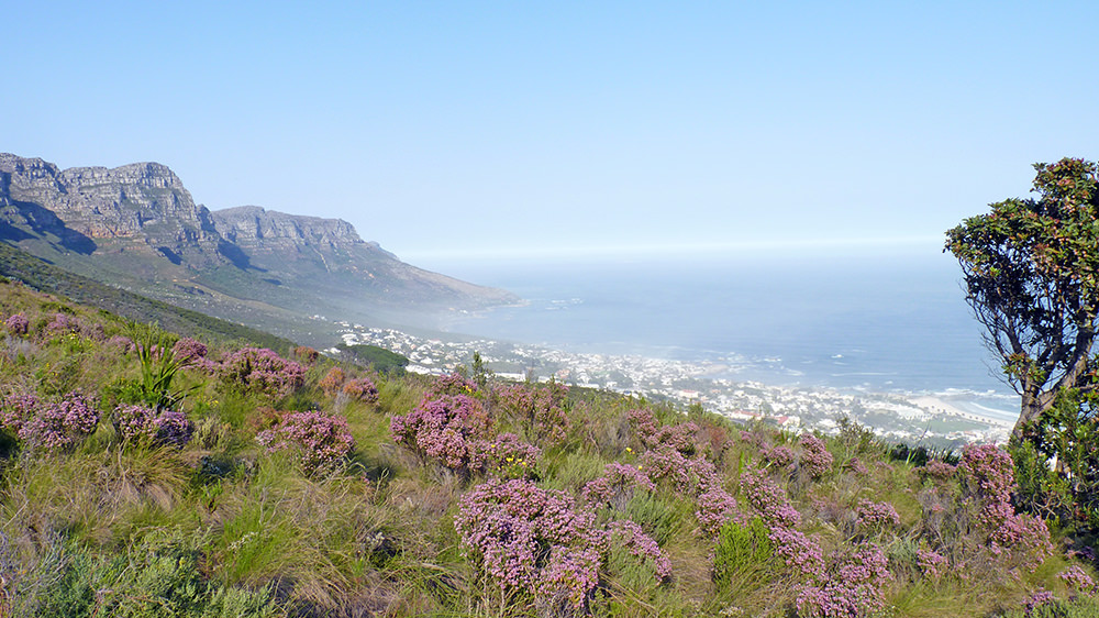 Table Mountain vue