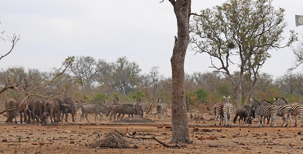 Safari Parc Kruger